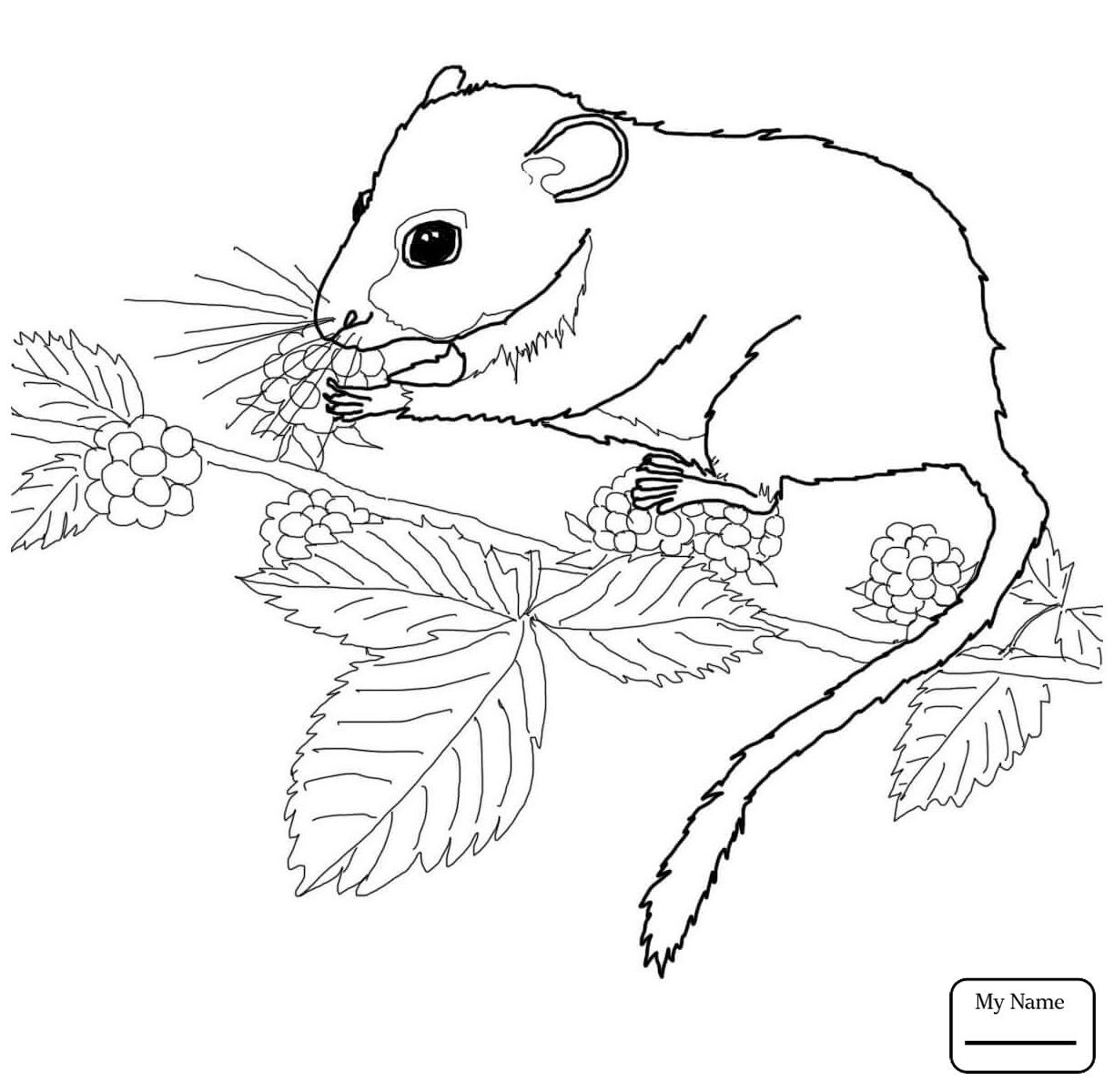 1224x1200 Dormouse Coloring Pages Gallery Coloring For Kids