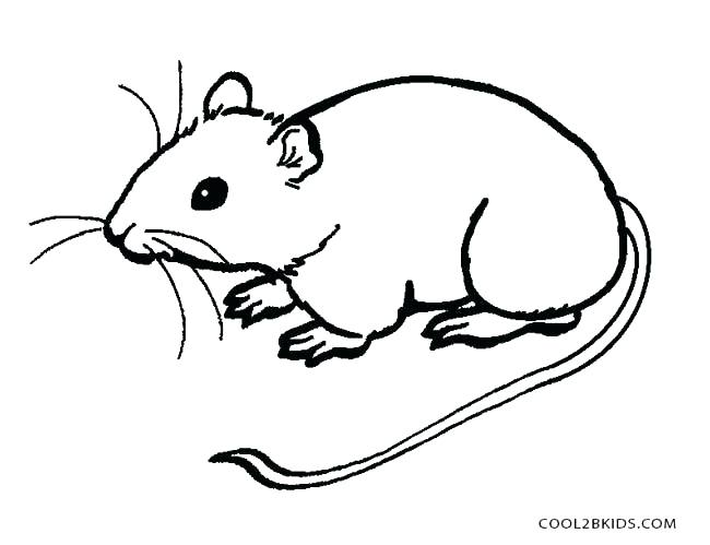 650x499 Coloring Picture Of A Mouse Mouse Coloring Pages Printable