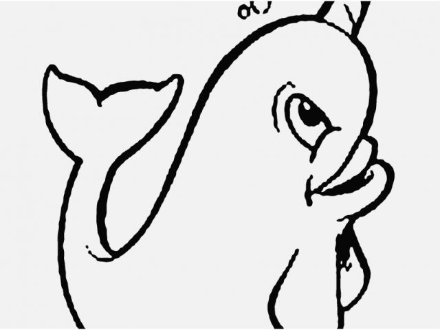 640x480 Copyright Free Coloring Pages Image Cute Narwhal Coloring Pages