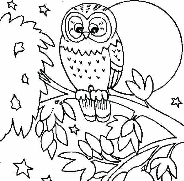 600x591 Printable Owl Coloring Pages Printable Owl Coloring Pages Owl