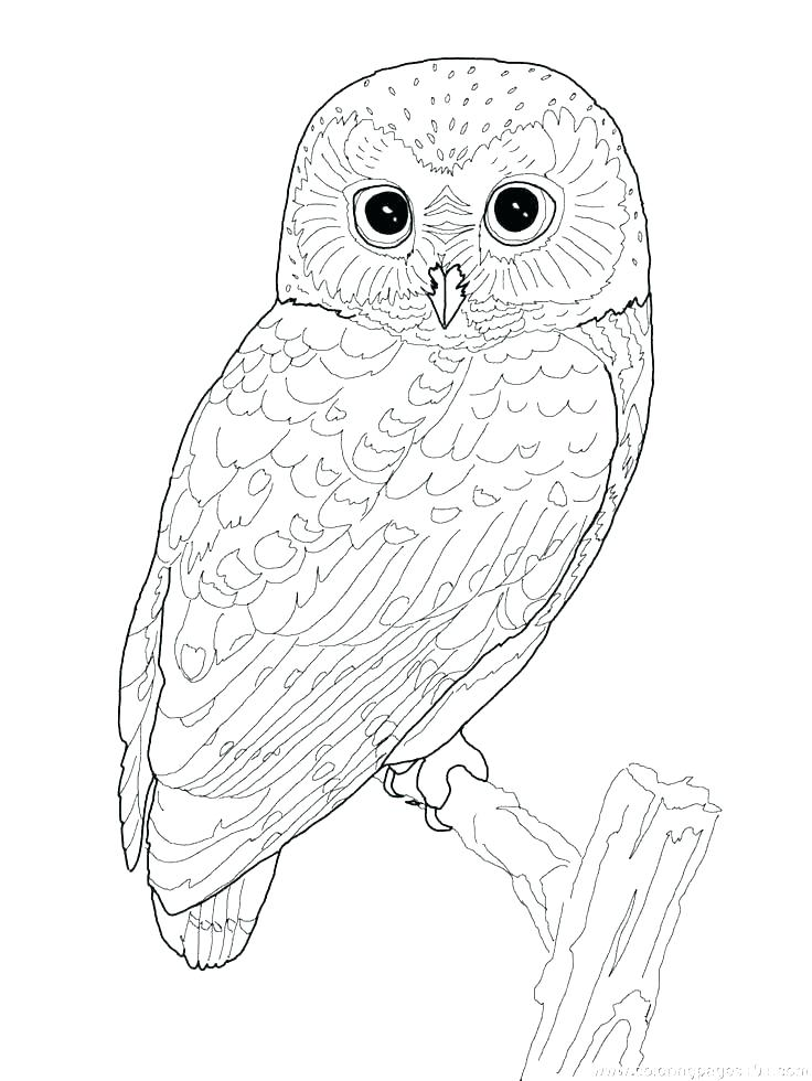 Cute Owl Printable Coloring Pages at GetDrawings | Free ...