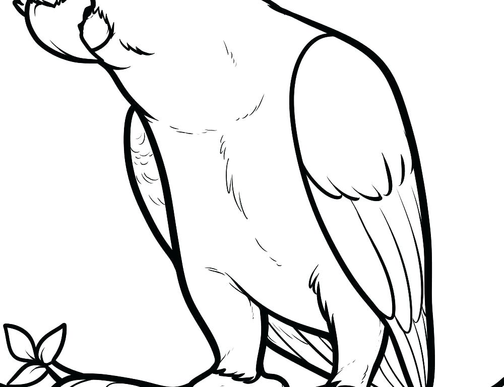 1000x768 Parrot Coloring Page Shy Parrot Coloring Page Cute Parrot Coloring