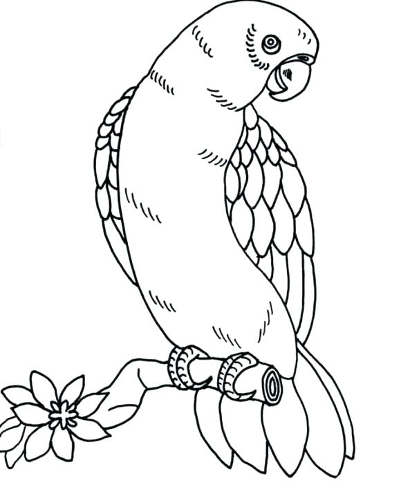 580x698 Baby Parrot Coloring Pages Parrot Coloring Pages Parrot Coloring