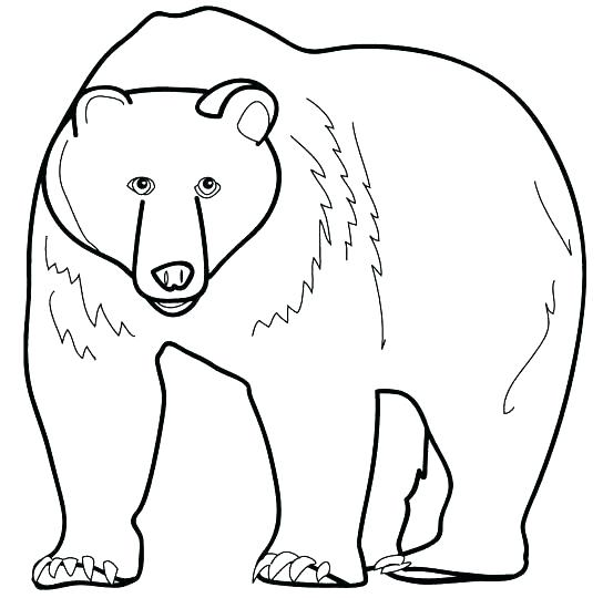 544x540 Polar Bear Coloring Pages Last Updated Realistic Polar Bear