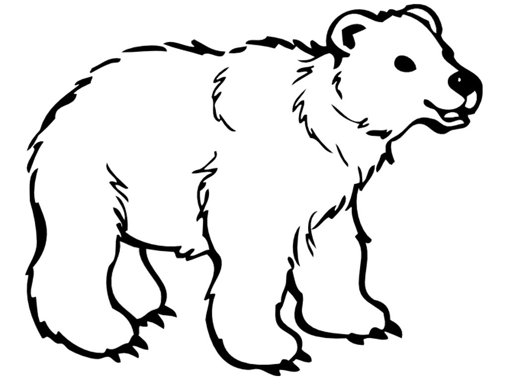 1024x768 Polar Bear Coloring Sheet Acpra