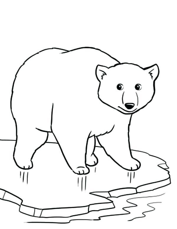 600x777 Polar Bear Coloring Sheets