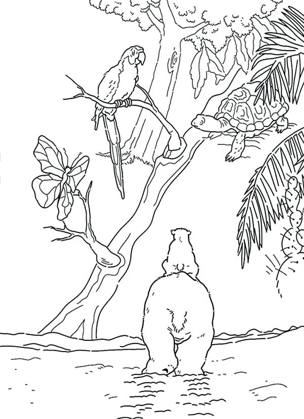 600x827 Polar Bears Coloring Pages