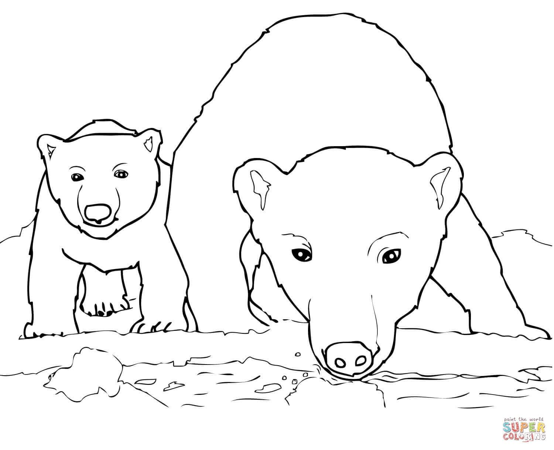 1500x1216 Rare Polar Bear Coloring Sheet Cute Pages Gall