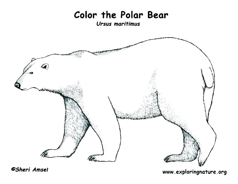 792x612 Baby Bear Coloring Pages Teddy Bear Picnic Coloring Pages Baby