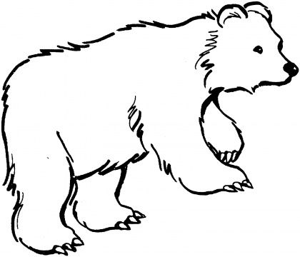 420x360 Cute Polar Bear Coloring Pages Coloring Pictures Panda Bears