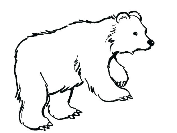 618x464 Polar Bears Coloring Pages