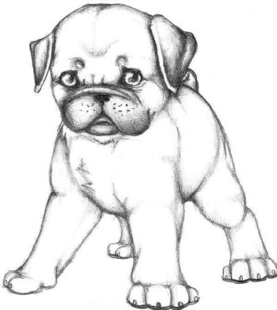 Cute Pug Coloring Pages