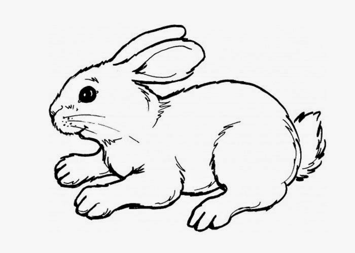 700x500 Cute Bunny Coloring Page Free Coloring Pages And Coloring Books