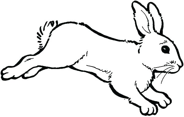 600x383 Coloring Page Rabbit
