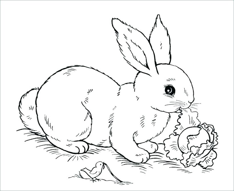 820x670 Bunny Coloring Page Free Bunny Coloring Pages More Images
