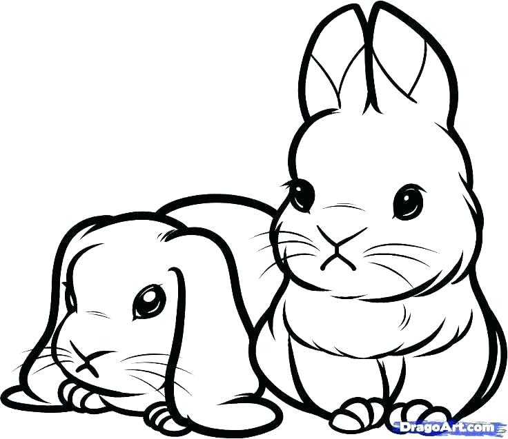 736x637 Bunny Rabbit Coloring Pages Printable Rabbit Coloring Pages