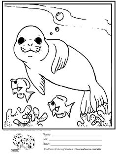 236x313 Baby Seal Coloring Page Projects To Try Baby Seal