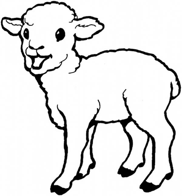 Cute Sheep Coloring Page At Getdrawings Com Free For Personal Use