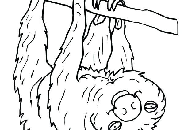 Cute Sloth Coloring Pages
