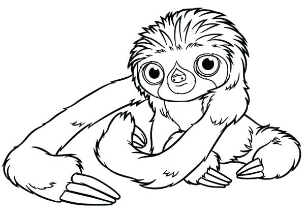 600x425 Cute Sloth Coloring Pages Perfect Sloth Coloring Pages Fee Page