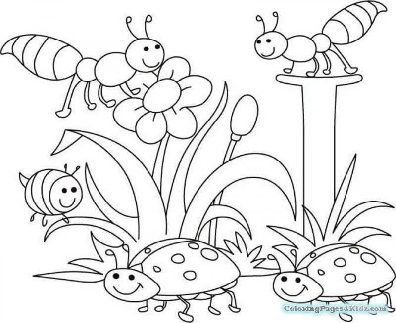 800x654 Cute Spring Baby Chick Coloring Pages Coloring Pages For Kids