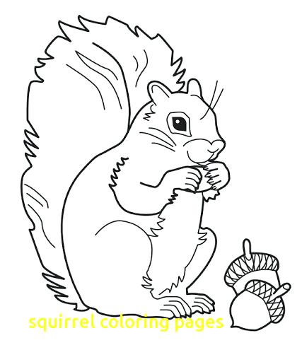 427x512 Squirrel Coloring Pages Flying Squirrel Coloring Page Squirrel