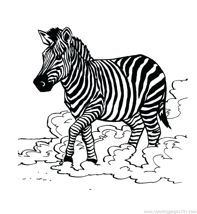 800x866 Coloring Pages Of Zebras Zebra Color Page Zebra Coloring Page Cute