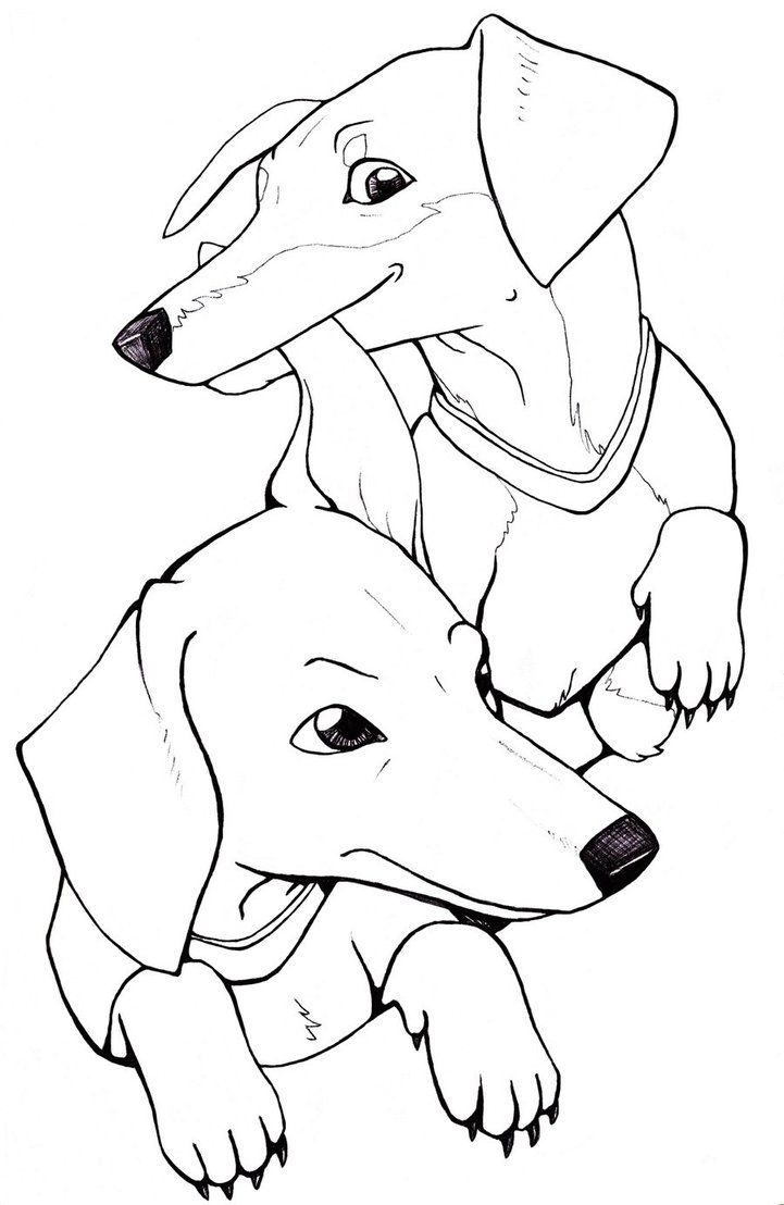 Dachshund Puppy Coloring Pages