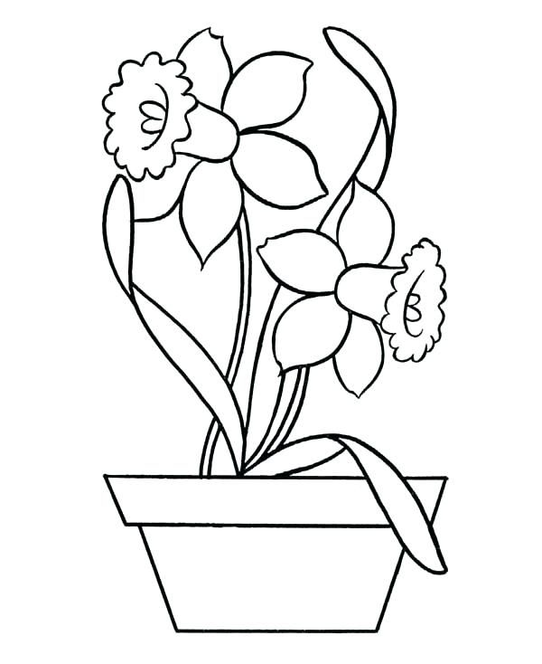 600x734 Pottery Coloring Pages Daffodil Coloring Page Daffodil In Pottery