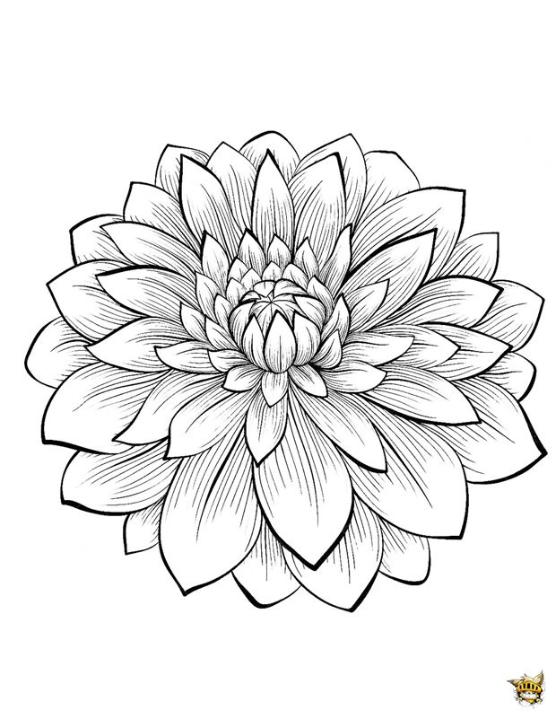 620x801 Dahlia Fleurs Dahlia, Diy Wall Art And Crayons