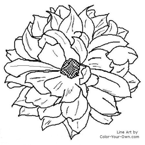 Dahlia Flower Coloring Pages At Getdrawings Com