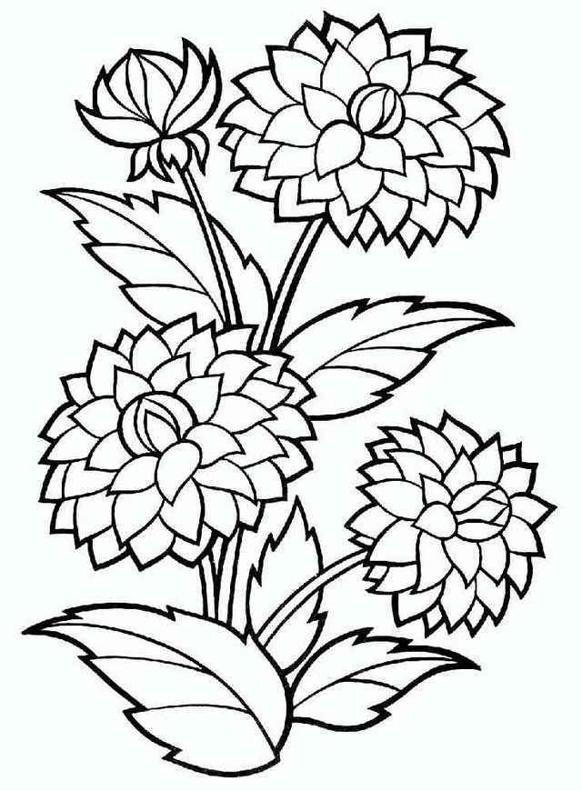640x870 Dahlia Flower Coloring Pages Forever Coloring