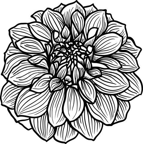 477x480 Hand Drawn Dahlia Flower Painting