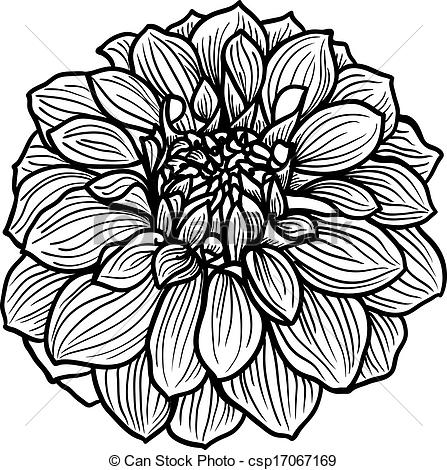 447x470 Dahlia Drawings Graphics, Drawing, Drawings, Vector Image