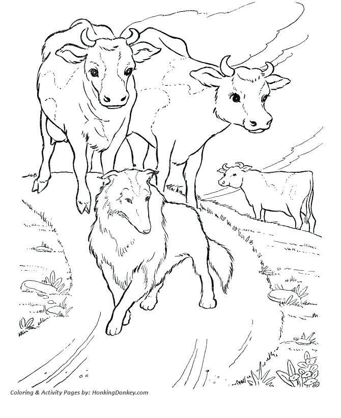 670x820 Cow Pictures To Color Or Cow Coloring Pages Photo Pictures