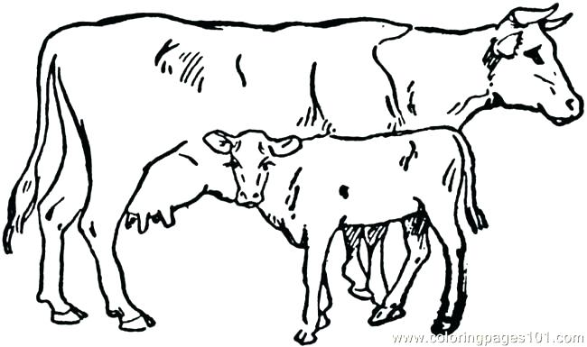 650x385 Cows Coloring Pages Printable Pig Coloring Pages To Print