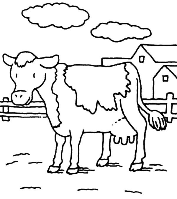600x676 Dairy Cow Netart