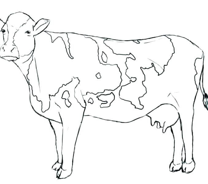 678x600 Free Cow Coloring Pages Printable Cow Free Cow Coloring Pages
