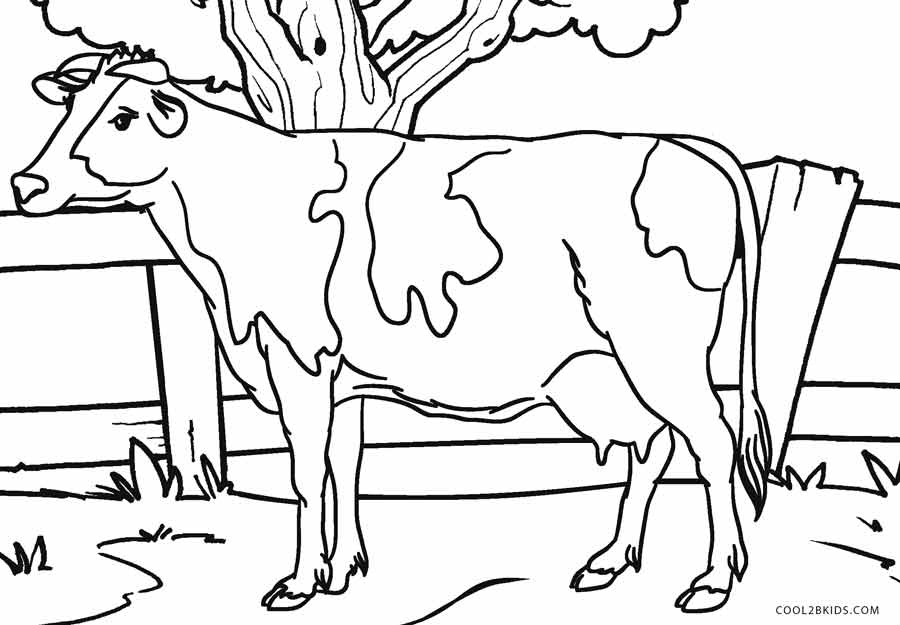 900x625 Free Printable Cow Coloring Pages For Kids