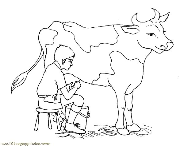 600x475 Milking Dairy Cow Coloring Pages