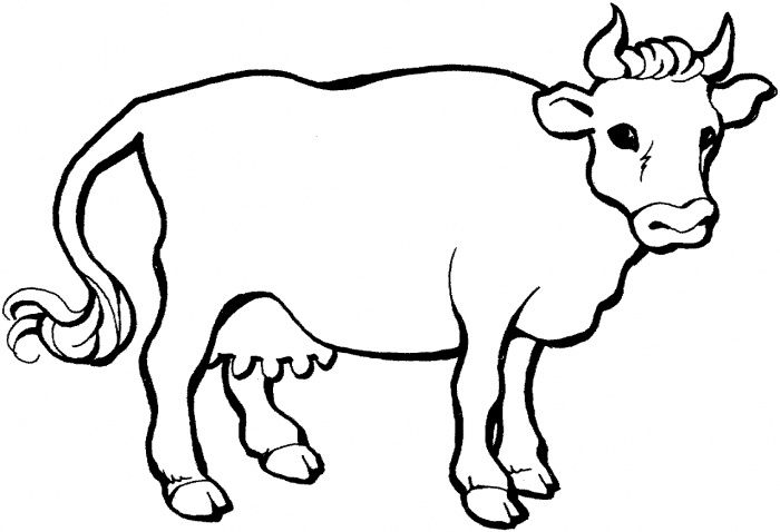 700x478 Cow Coloring Pages For Free Dairy Cow