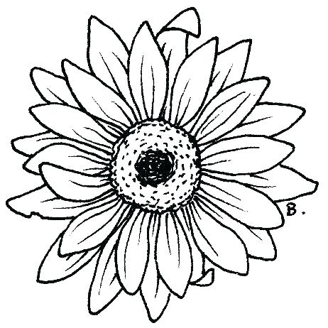 462x462 Daisy Coloring Page Daisy Coloring Pages Coloring Pages Daisy