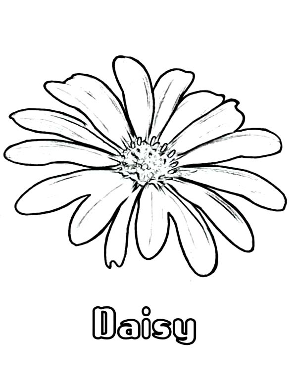 600x776 Daisy Flower Coloring Page For Kids