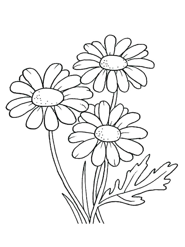 750x1000 Girl Scout Daisy Coloring Pages Daisy Girl Scout Coloring Pages