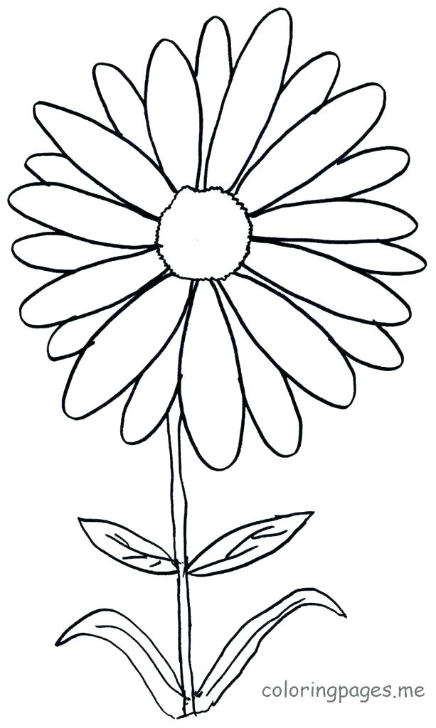 613x1024 Daisy Coloring Pages