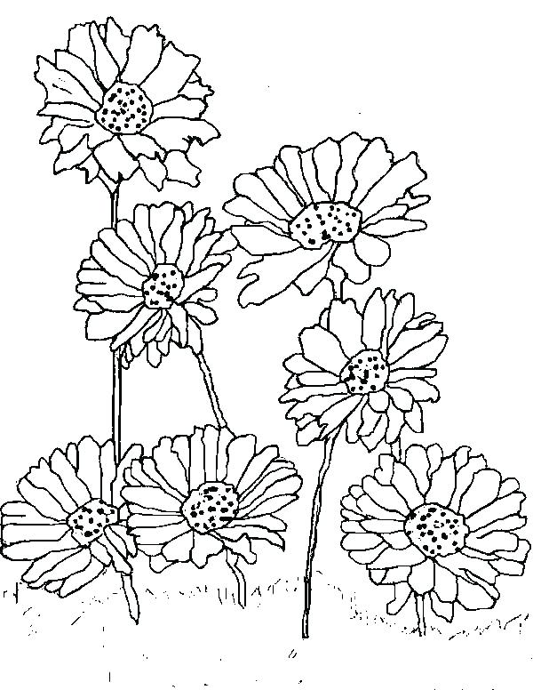 600x776 Daisy Coloring Pages Best Coloring Book Daisy Girl Scout Coloring