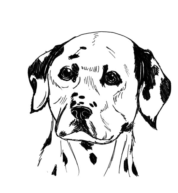 Collection Dalmatian Fire Dog Coloring Pages Pictures ...