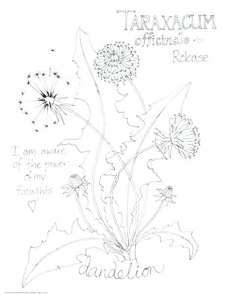 Dandelion Coloring Page At Getdrawings Com Free For Personal Use