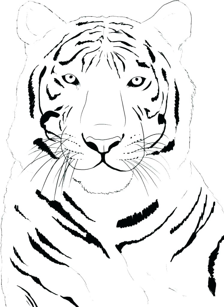 747x1024 Printable Tiger Coloring Pages Tiger Ring Pages R Page Tigers