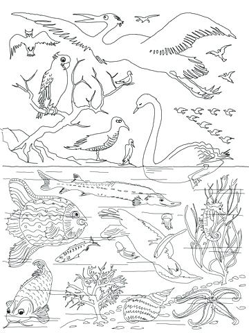 360x480 The Creation Coloring Pages For Children Fresh Decoration Creation